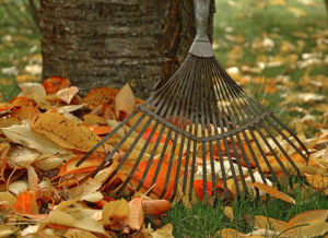 autumn garden maintenance Rotherham Doncaster Sheffield