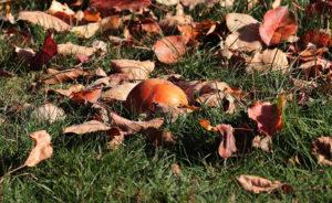 autumn gardening gardener Rotherham Doncaster sheffield