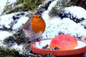 gardening in winter months