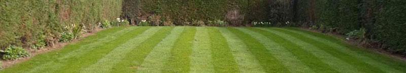 grass cutting lawn maintenance Rotherham