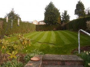 lawn care Rotherham Sheffield