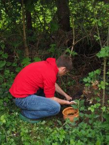 plant lifting gardener Rotherham Doncaster Sheffield